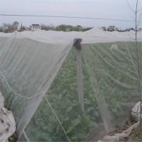 厂家供应多类防虫网大小网孔的全新料纱网质量好图片