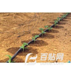 供应沃达尔滴灌带 膜下滴灌 滴灌技术图片