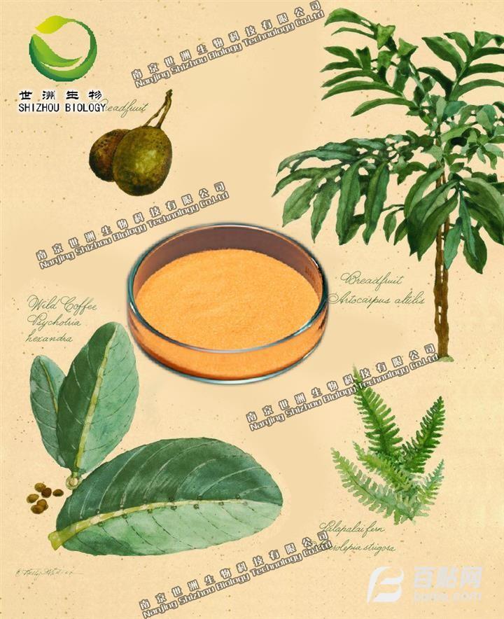 减脂叶提取物,纯天然植物提取物,厂家现货直供,医药原料图片