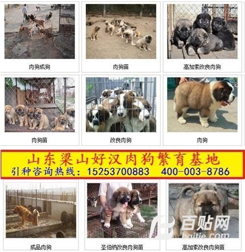 供应福建龙岩哪里有大型养狗场图片