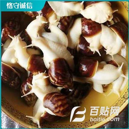 杂交蜗牛价格 蜗牛养殖场 白玉蜗牛养殖场出售供应图片