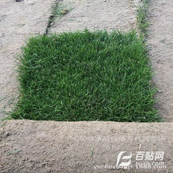 幼儿园用混播草坪卷 别墅用 混播草皮卷图片