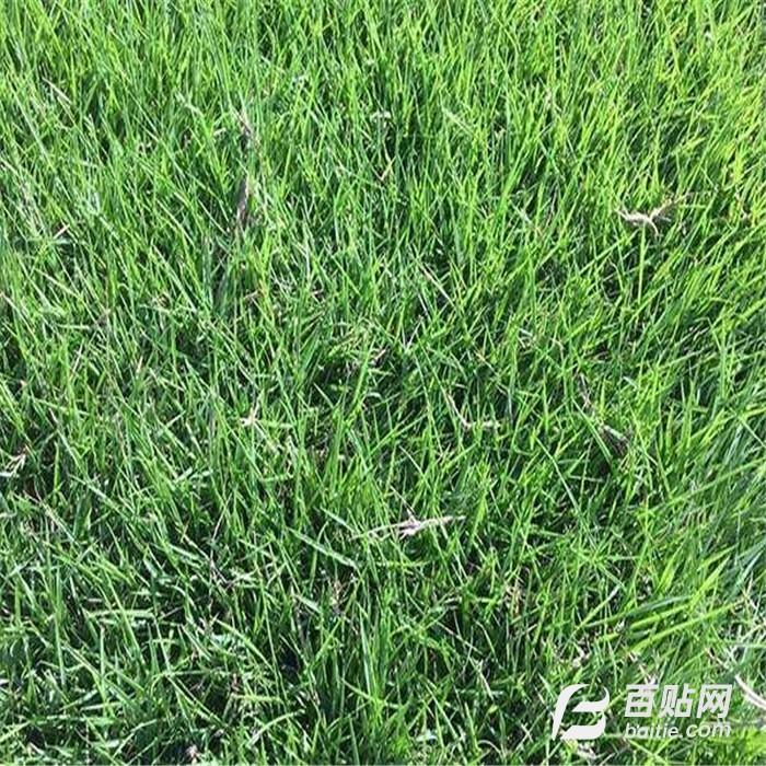 中山草块图片